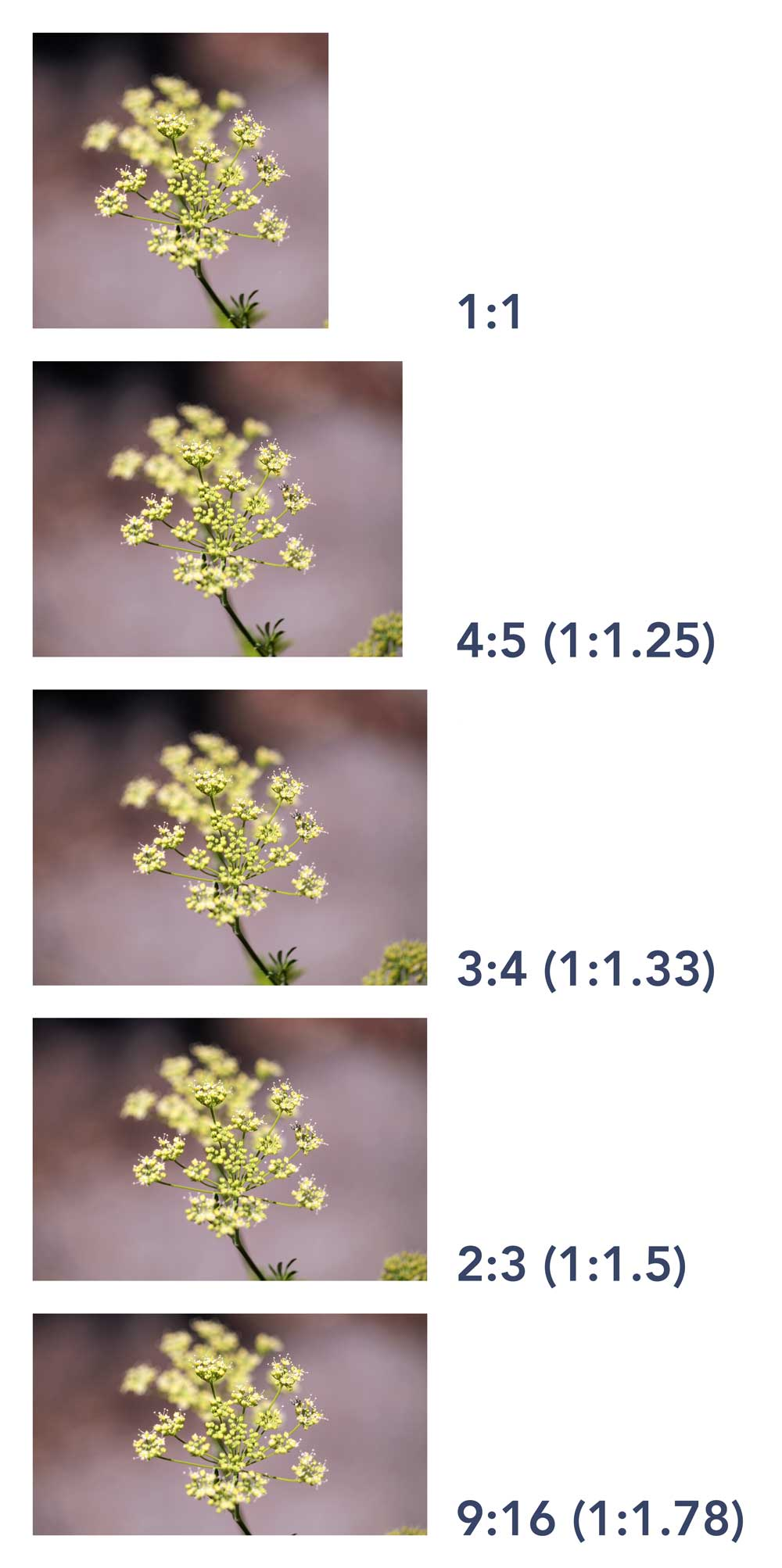 Differences among standard photographic aspect ratios.