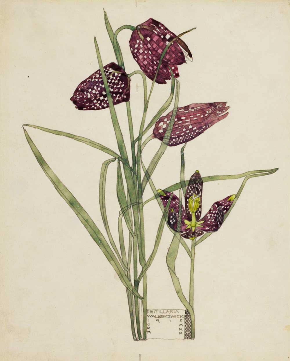 """Fritillaria,"" 1915, by Charles Rennie Mackintosh"