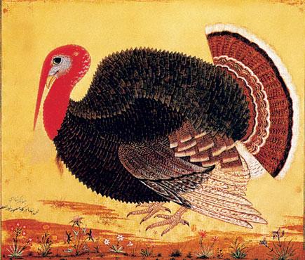 turkeycock by mansur