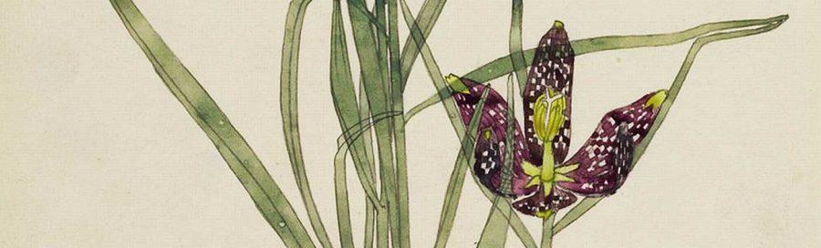 """Fritillaria"" (detail), 1915, by Charles Rennie Mackintosh"