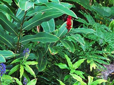 honolulu garden
